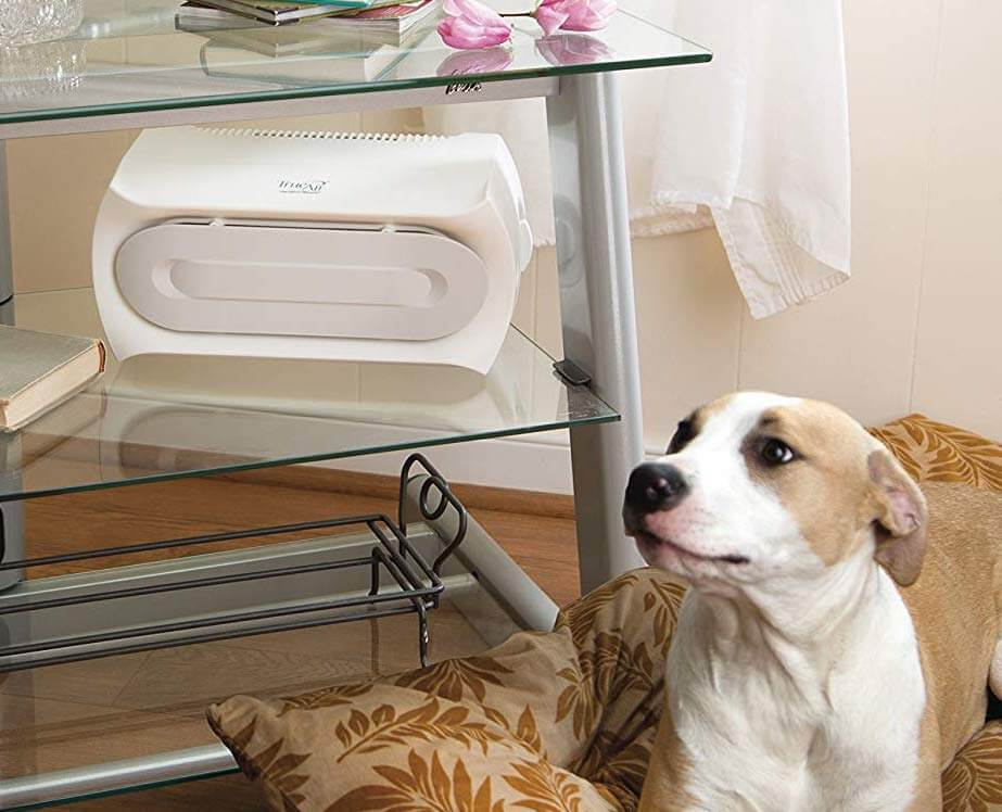 air purifier near a dog