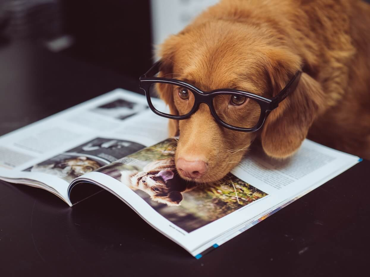 pet with glasses reading book